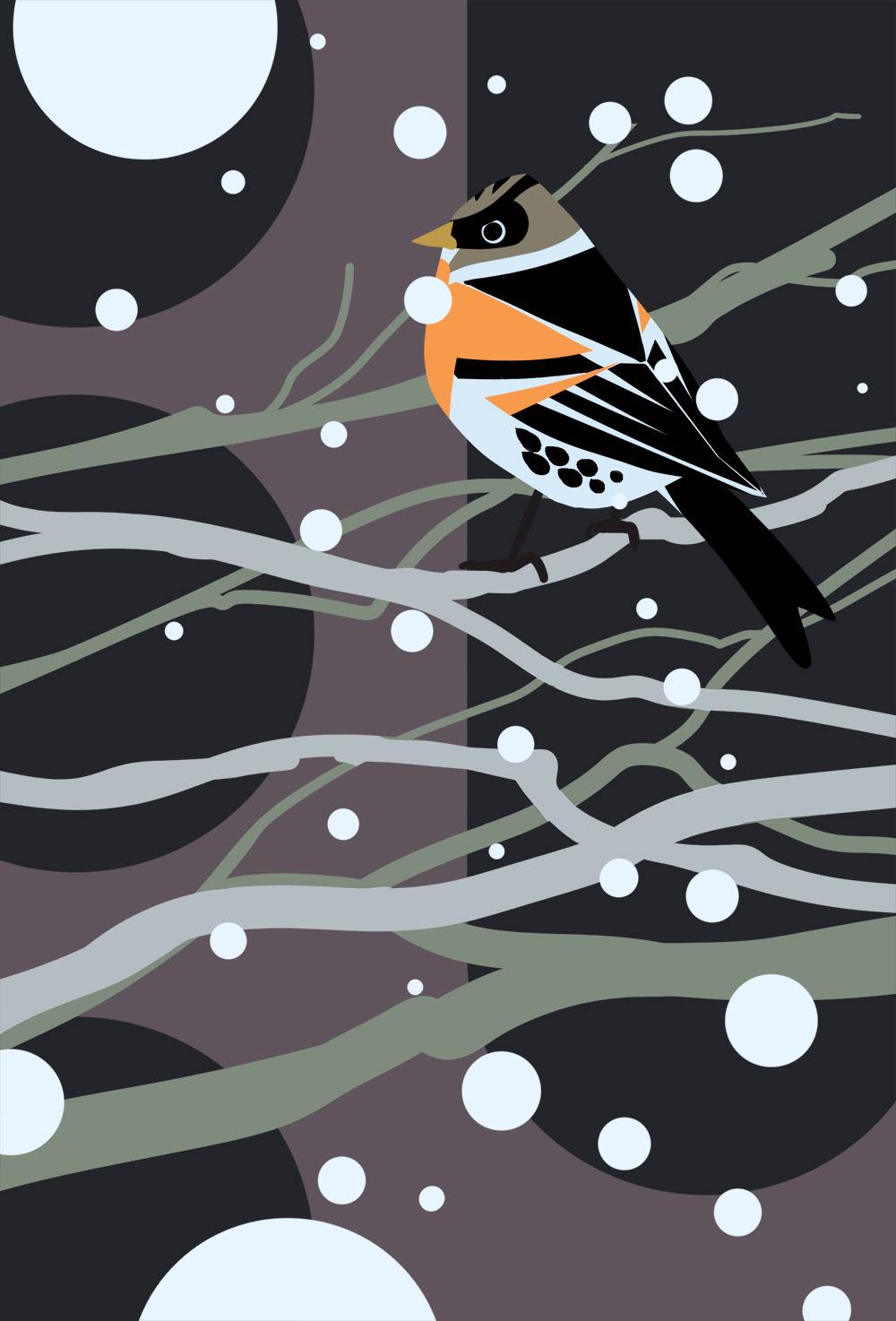 Leicht abstrakte, grafische Darstellung eines Bergfink