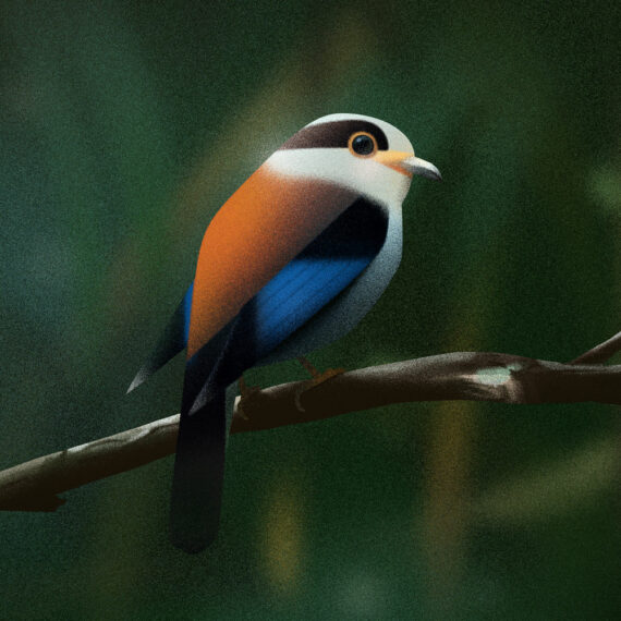Coverbild für Projektgalerie: Vögel