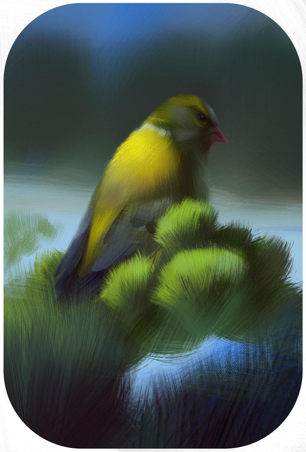 Leicht abstrakte Darstellung eines Grünfinks