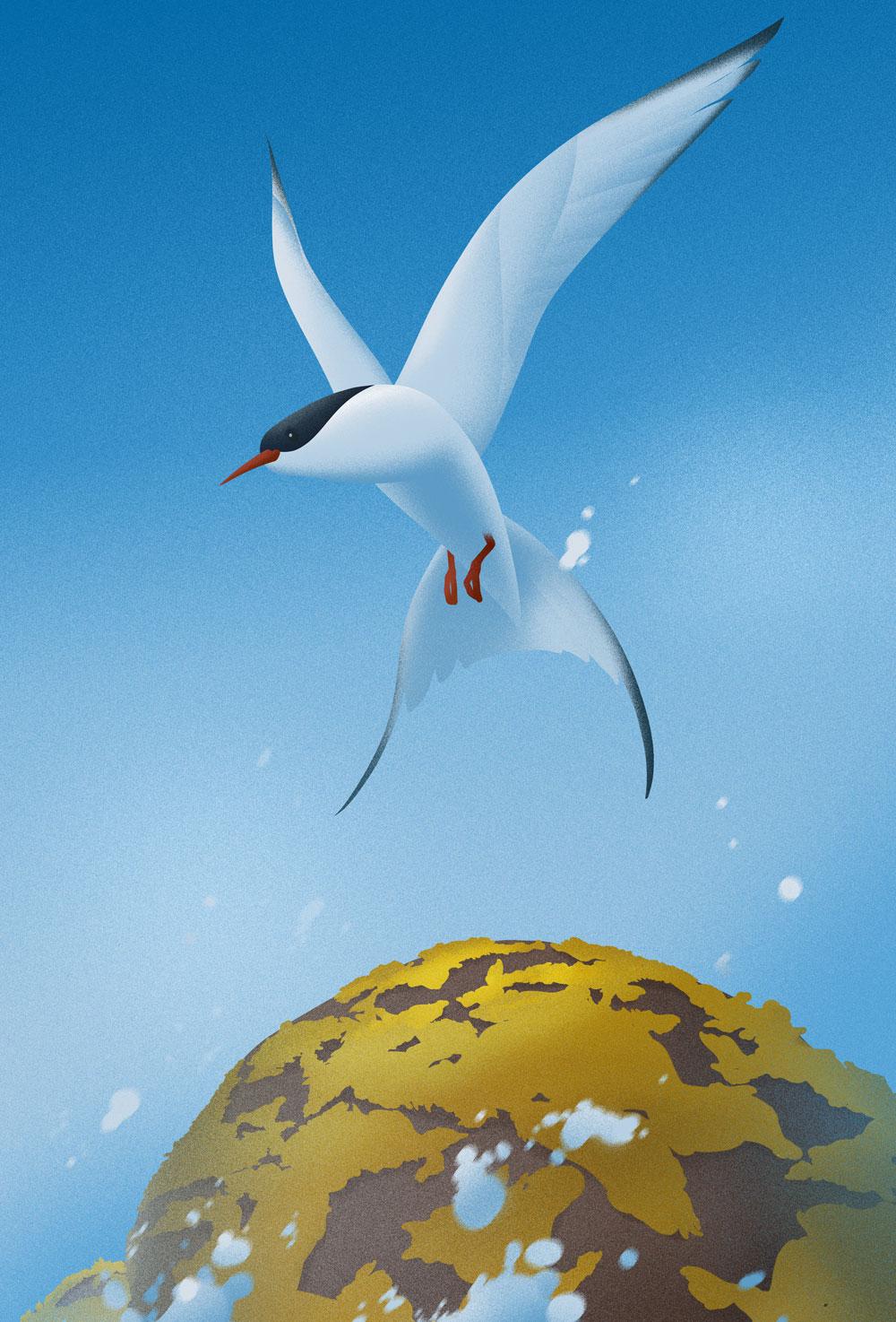 Leicht abstrakte Darstellung einer Kuestenseeschwalbe