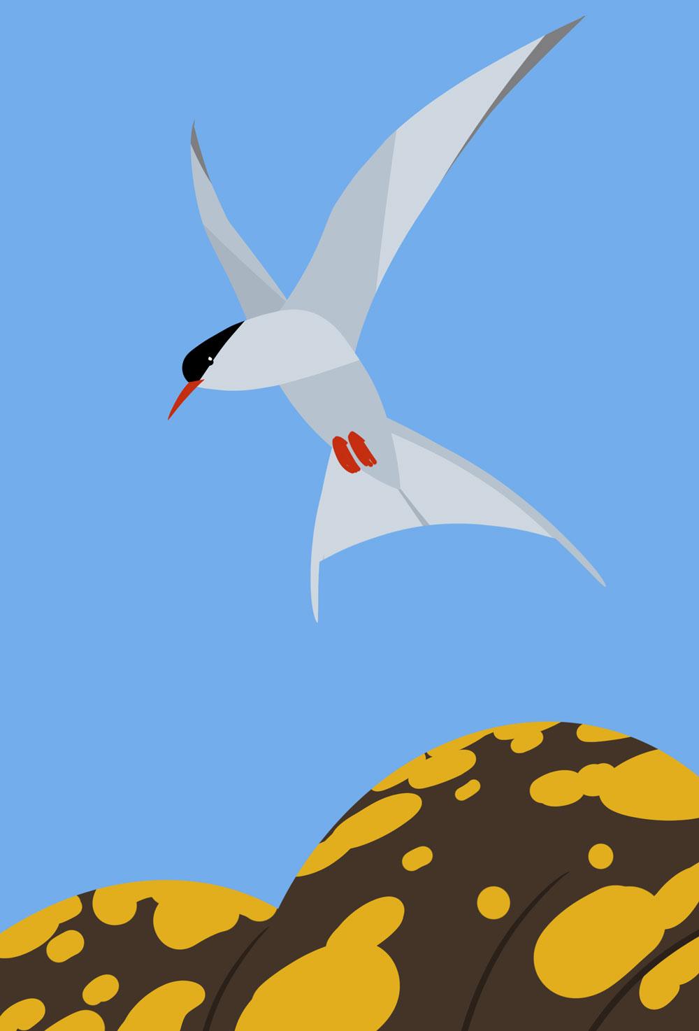 Leicht abstrakte, grafische Darstellung einer Küstenseeschwalbe